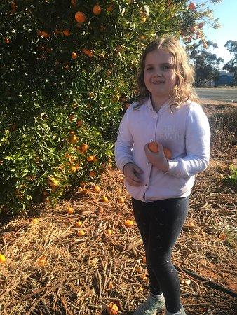 Educational oranges