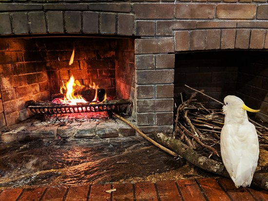 Enjoy a fire in the cool season.  Our resident cockatoo.