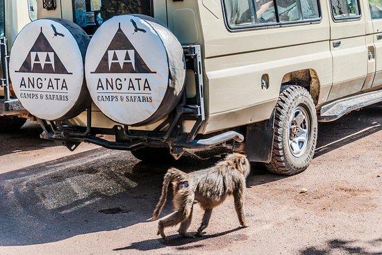 Angata Camps & Safaris