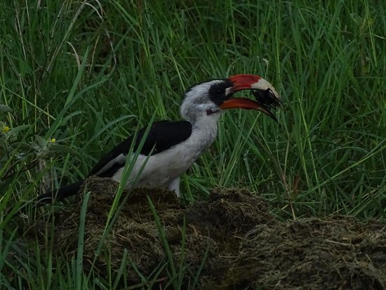 Lake Manyara National Park, Tanzania: A beautiful bird at Manyara