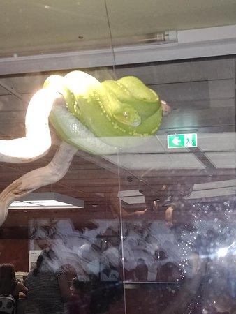Live bright green tree snake