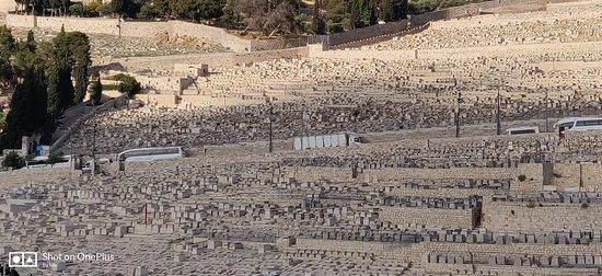 Monte degli ulivi
