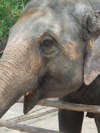 Best elephant experience ever