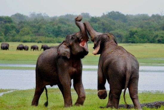 Sri Lankan Smiles - The Travel Company