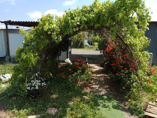 Givat Yoav: Camp Golan Flowers