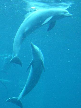 Delfine im Blauen Salon