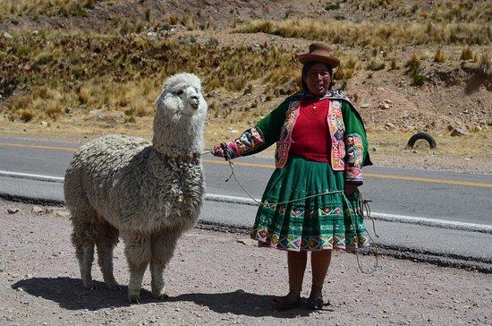 Puno Region, بيرو: Peruvian woman with lama Alpaca - La Raya Pass  - 4.335 m.s.n.m. - Puno Region - Peru
