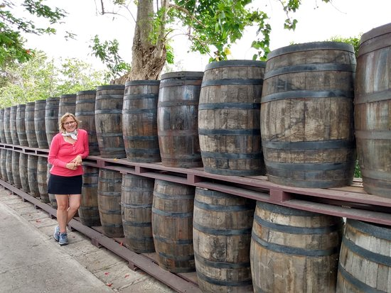 Mount Gay Signature Rum Tasting in Barbados: Barrels