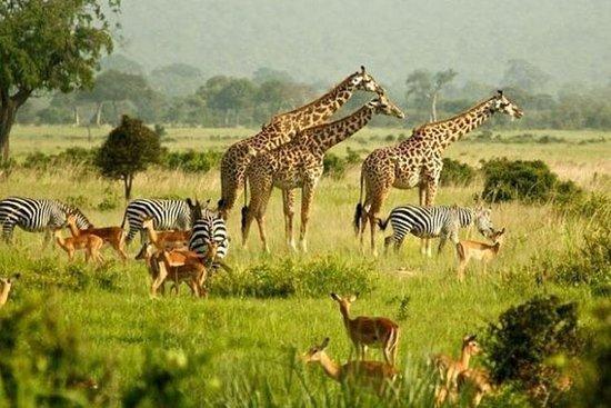 Foto de Entebbe