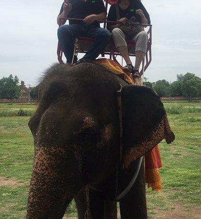 ここでしか象に乗れないと案内された