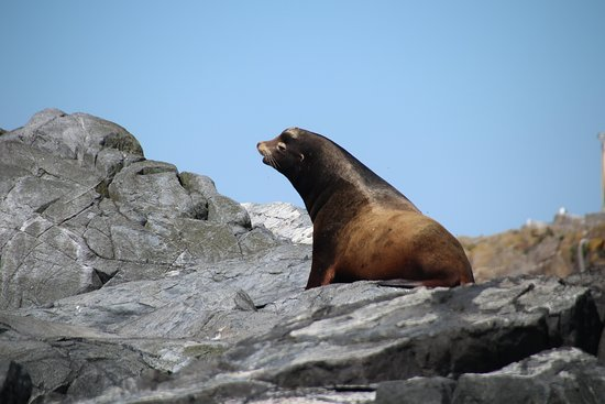 Esquimalt eco tours