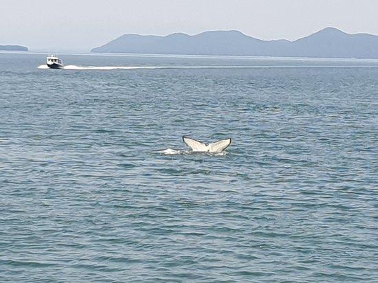 Valokuva: Juneau Whale Watching Tour