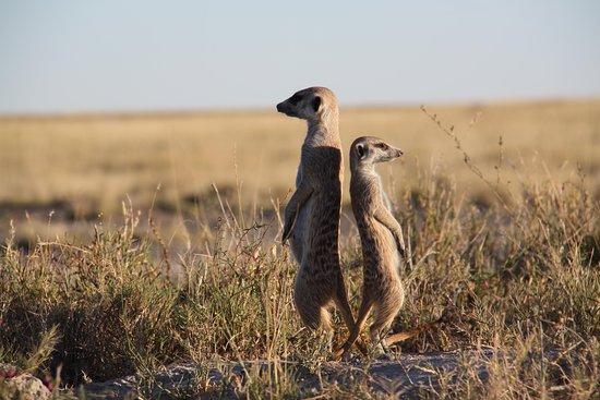 African Wanderer Tours + Safaris