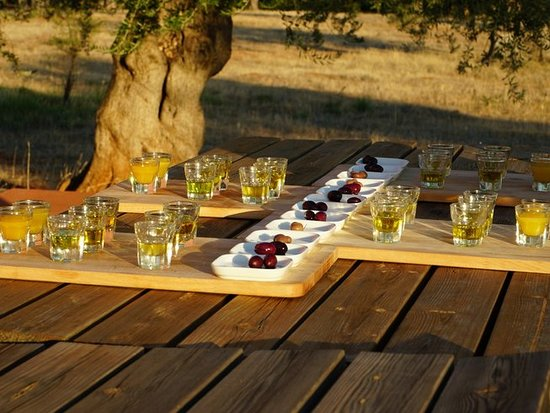 Laconia Region, Hellas: An unforgettable Olive oil tasting in the perennial olive groves of a unique Eco farm in Laconia!!