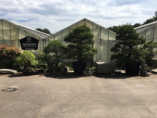 Herons Bonsai Lingfield 2020 All You Need To Know Before You Go With Photos Tripadvisor