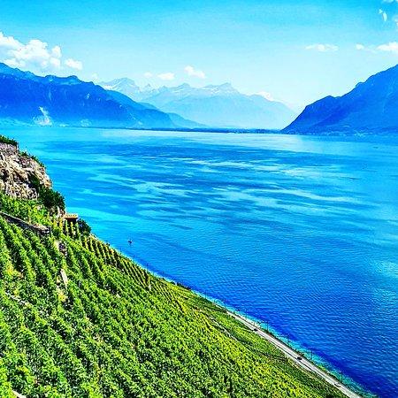 St-Saphorin-Lavaux, Schweiz: Beautiful Lavaux in Switzerland 🇨🇭! Jolie vue depuis le Lavaux sur le lac de Genève (lac Léman), bella foto in Lavaux. Ein schönes Foto in Lavaux !