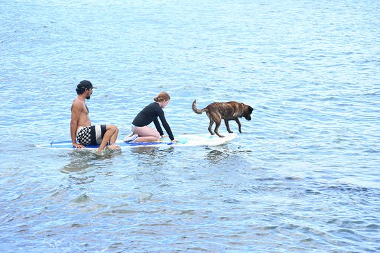 Kona was helping to paddle.