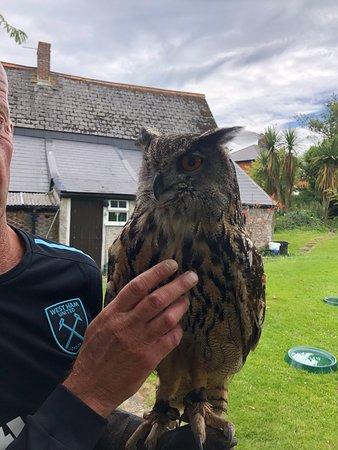 One of the birds of prey