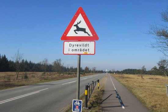 "Krondyrsrudlen: ""Indgangen"" til Danmarks største krondyrs-reservat."