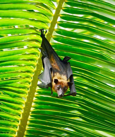 The coolest fruit bats ever can be seen every evening flying the grounds or found chilling from a branch during the day.