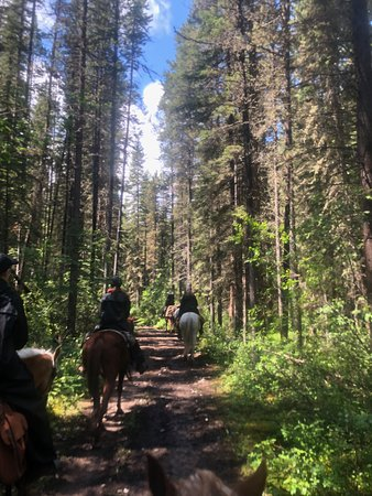 6-Day Halfway Lodge Backcountry Trip by Horseback: Riding through the pines
