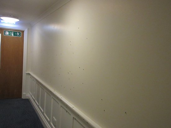 Travelodge Snaresbrook: Scores of Insects in the morning