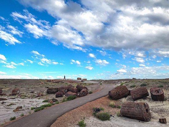 Petrified Forest National Park, Arizona: Petrified Forest National Park