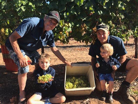 Olive Farm Wines