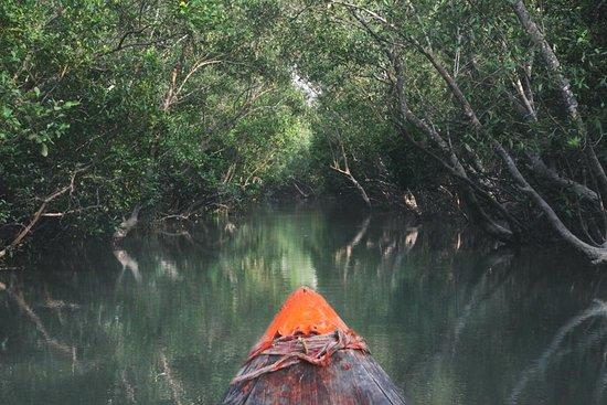 Sundarban Beckons