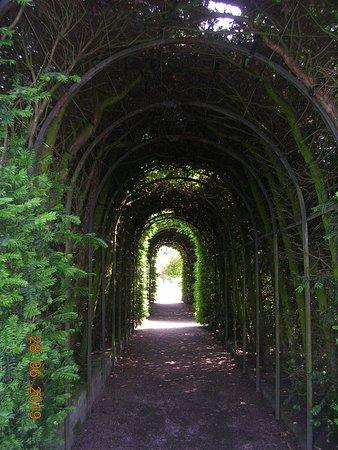 Tree Tunnel (Little Moreton Hall)