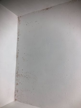 mould on roof in shower