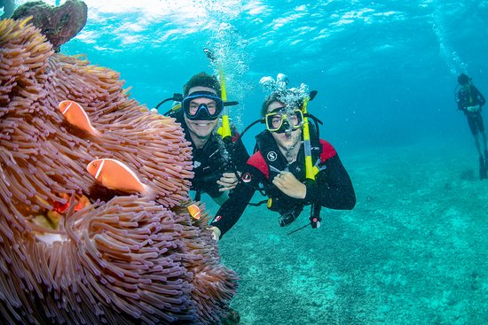 Great Barrier Reef Eco Snorkel and Dive Cruise from Cairns - Including Lunch: Shot taken on our Tusa dive. Saxion Reef.... With Nemo in the foreground!