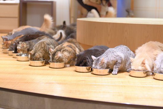 Cat Cafe Mocha Lounge Shinjuku: 猫カフェモカラウンジ新宿店