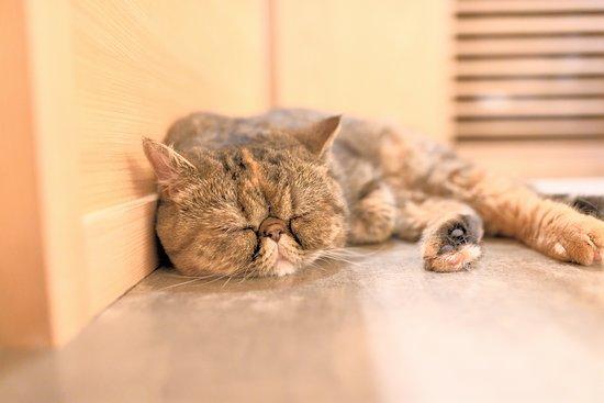 猫カフェモカラウンジ新宿店
