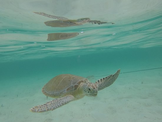 Tyman Fishing Charters: Feeding and Taking pictures of Turtles
