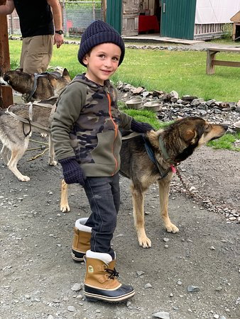 Gold Rush Dog Sled Tours: Great place for young kids!
