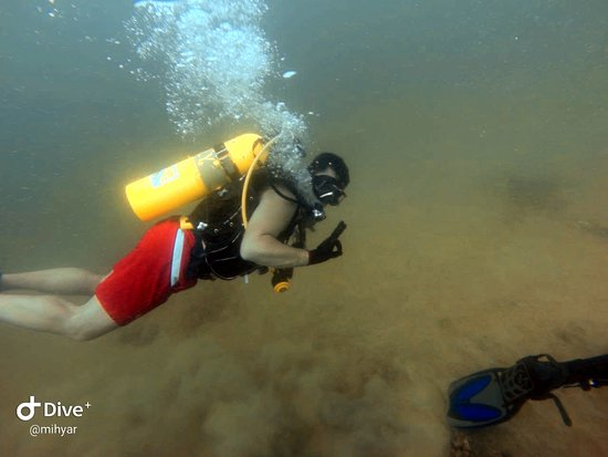 Diving trips in Qatar
