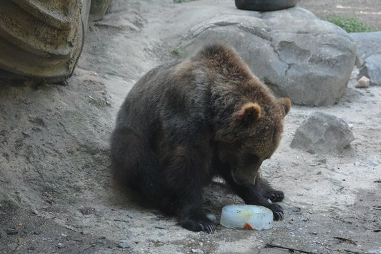 The Maryland Zoo: The Maryland Zoo