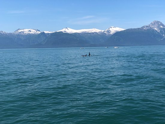 Juneau Whale Watching Tour: Orcas and mountains