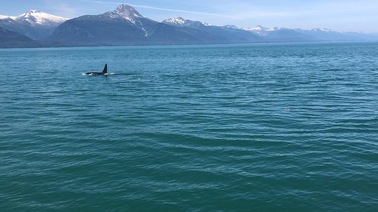Juneau Whale Watching Tour: Orca and Mountain