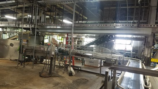 Can Beer Production Line - Picture of D G  Yuengling and Son
