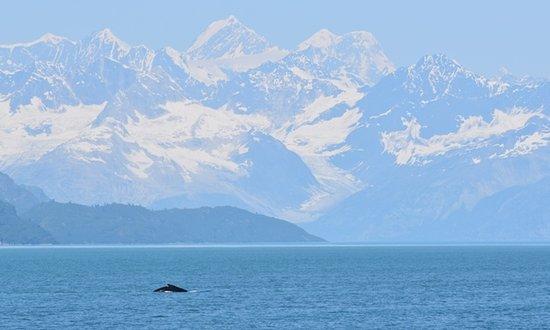 Glacier Bay National Park & Preserve 사진