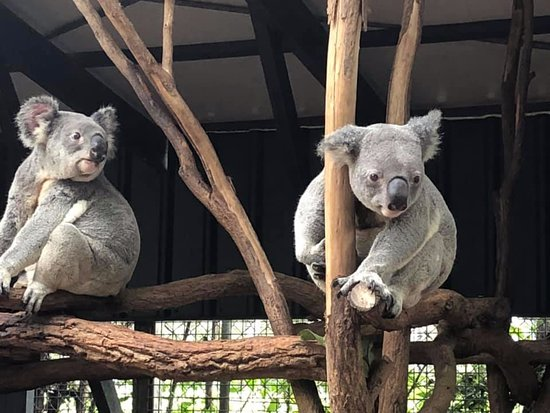 Lone Pine Koala Sanctuary Day Pass: Having lunch with us