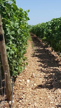 Unsere Wein Winzer aus Italien in Brindisi Altemura.