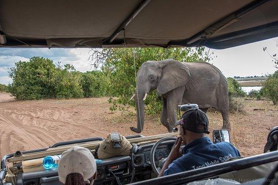 Treck Africa Safaris