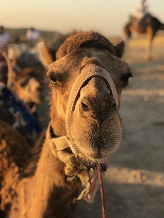 Morocco Discovery Holidays: Ha ha