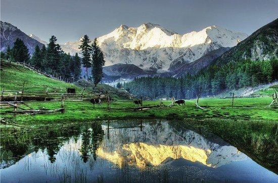Chilas, Pakistan: Fairy Meadows, the base camp of Killer mountain Nanga Parbat 9th Highest Peak in The World and Second Highest Peak in Pakistan