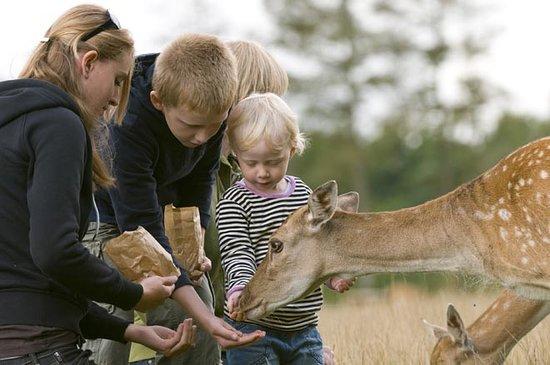 Scandinavian Wildlife Park: Vores gæster kan håndfodre de frække dådyr, der hurtigt kommer helt tæt på.