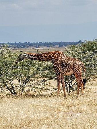 Swahili Paradise Tours & Safaris (Dar es Salaam) - 2019 All