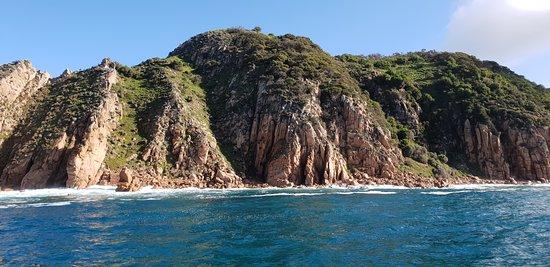 תמונה מPhillip Island Whale Watching Tour